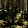 Old Narnians