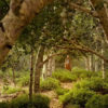 Trees Waving