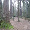 Aslan's Farewell - Canterbury Sightseeing