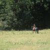 Georgie Riding a Horse - Steven Hofmann