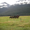 A Group of Horsemen - Ryan and Pamela